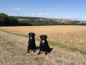 Fiby und Heidi beim Spaziergang in Koblenz